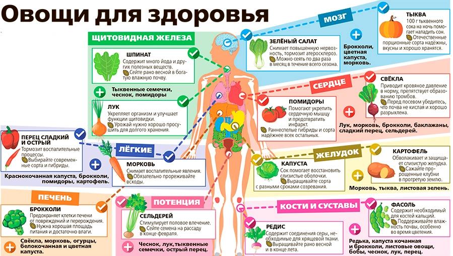 Овощи для здоровья