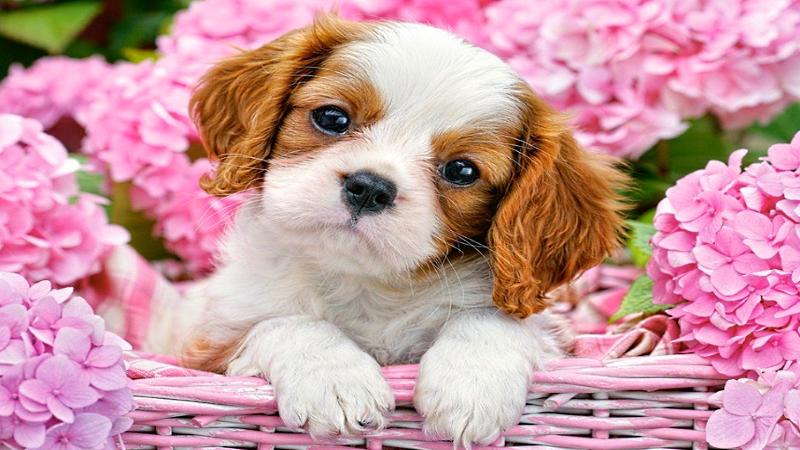 Как правильно выбрать щенка, любой породы