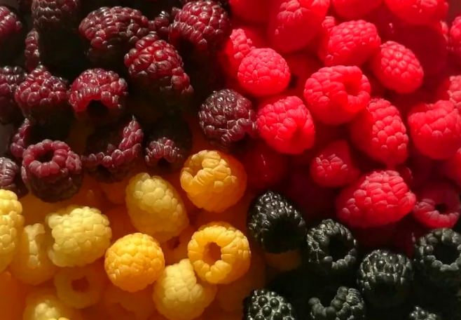 Разные сорта малины, фото для статьи