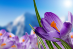 Народные приметы, загадки, пословицы и поговорки о весне